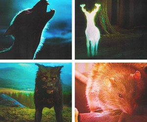 harry potter and canuto image