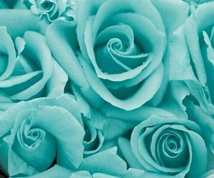 rose, blue, and flowers image