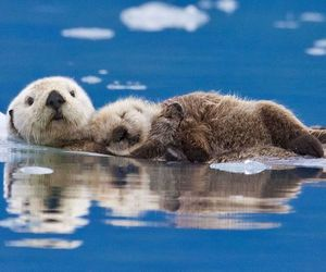 baby, sleep, and sea otters image