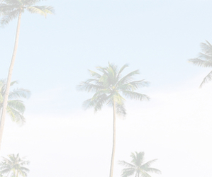header, twitter, and palm trees image