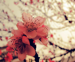 ?, flower, and spring image