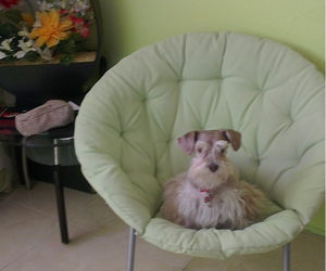 chair, dog, and flowers image