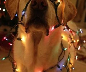 cute and christmas animals image