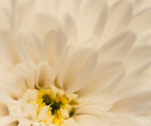beauty, flower, and life image