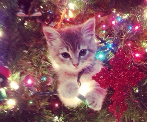 christmas, kitten, and cute image