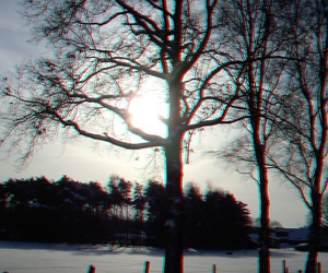 3d, nature, and tree image