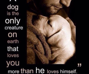 dog, love, and animal image
