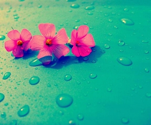 blue, drops, and pink image