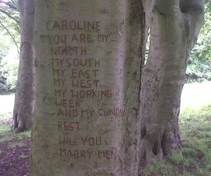 love, tree, and proposal image