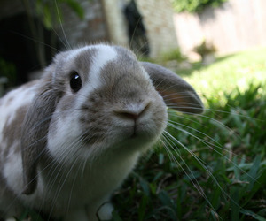 bunny, grass, and cute image