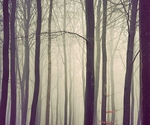 forest, fog, and trees image