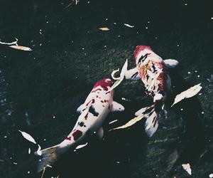 colorful, fish, and koi image