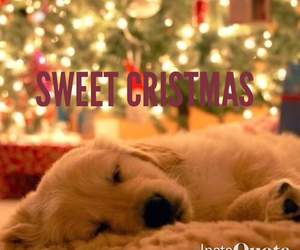 christmas, golden retriever, and sweet image