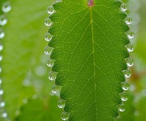 beads, dew, and leaf image