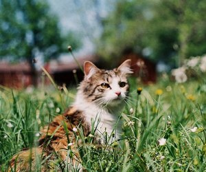 cat, pet, and summer image