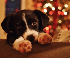 cute, puppy, and christmas image