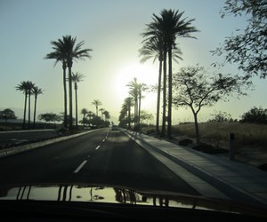 palm trees, road, and sky image