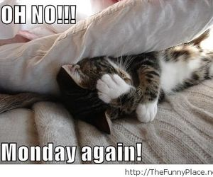 cat and monday image