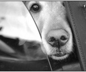 dog, black and white, and car image
