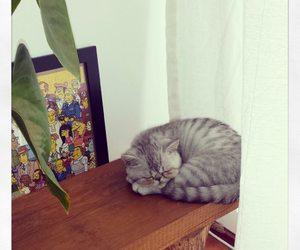 cat, kitty, and Sunday image