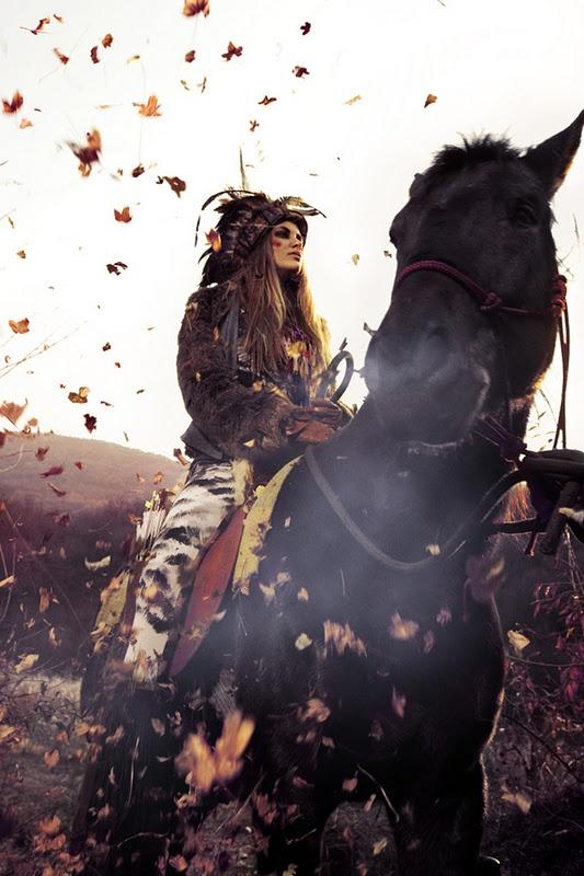 gypsy horse image