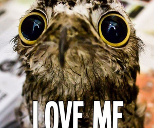love, owl, and love me image