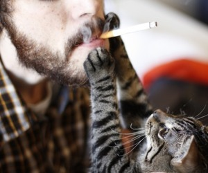 cat, smoke, and cigarette image