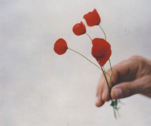 flowers, hand, and pure image