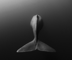 whale, ocean, and black and white image