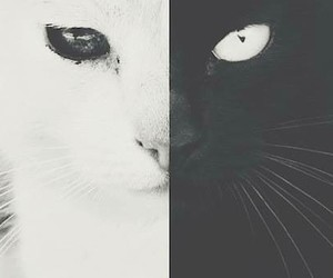 black white cat eyes image