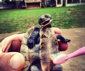 turtle, animal, and smile image