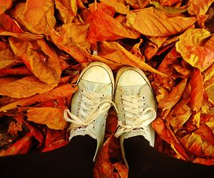 autumn, converse, and leaf image