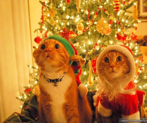 adorable, cats, and lights image