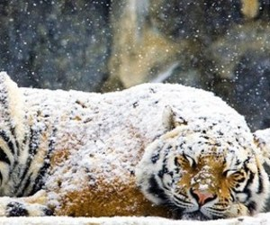 animal, christmas, and snow image