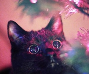 cat, christmas, and light image