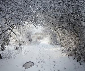 cozy, hiding, and scandinavia image
