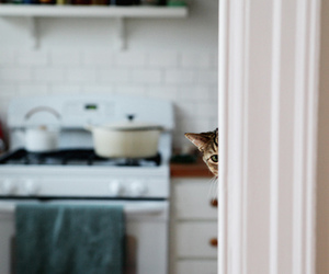 cat, kitchen, and cute image