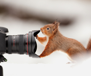 squirrel, camera, and cute image