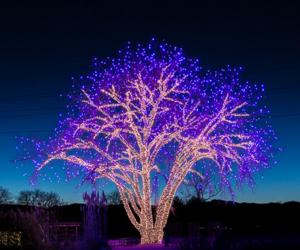 tree, lights, and beautiful image