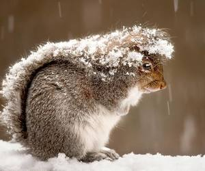 snow, squirrel, and nature image