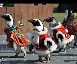 animals, christmas, and korea image
