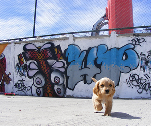 dog, graffiti, and puppy image