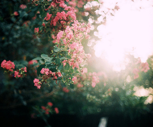 forest, roses, and garden image