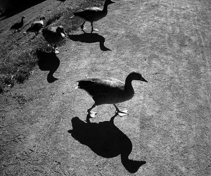 duck and photography image