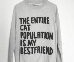 cat, sweater, and bestfriend image