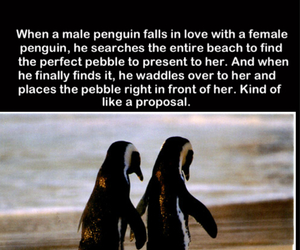 aww, beach, and propose image
