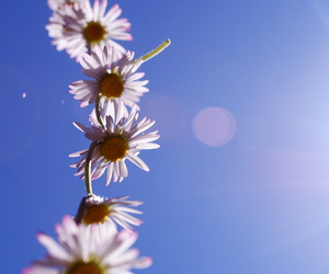 blue sky, daisy chain, and summer image
