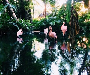 flamingo, green, and nature image