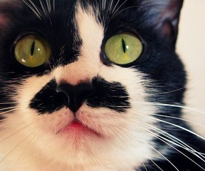 cat, mustache, and cute image