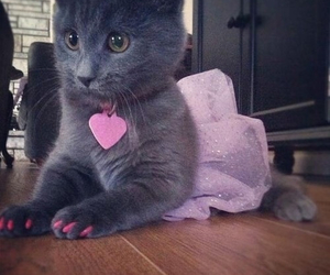 cat, pink, and cute image